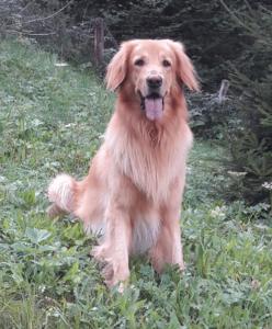 Hund sitzt im Gras im Wald